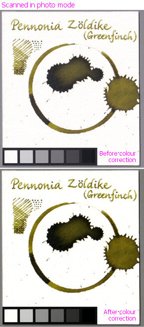 Pennonia Zöldike (Greenfinch)