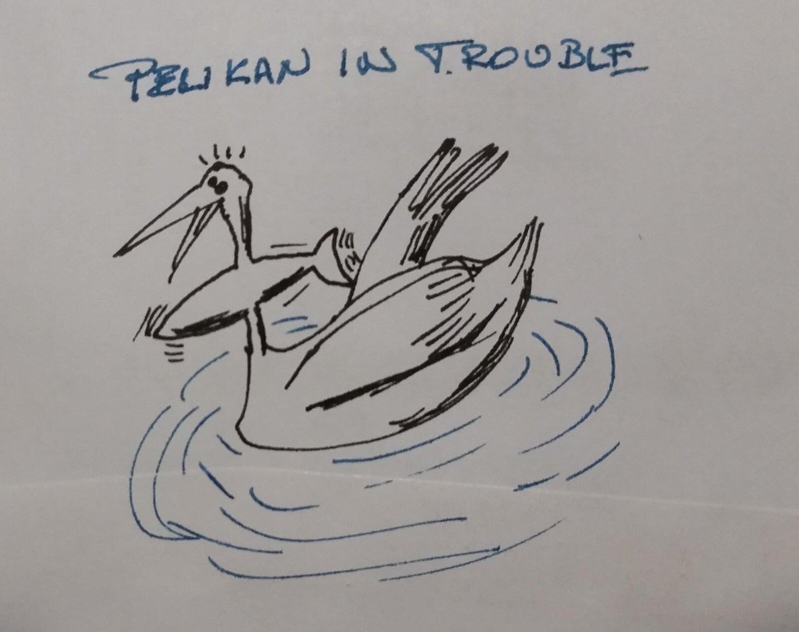 pelikan in trouble.jpg